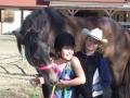 horse-image-1-800X600.jpg