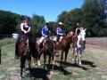 horse-image-2-800X600.jpg