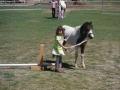 horse-image-3-800X600.jpg